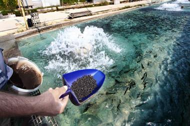 Au aparut primele ghiduri pentru acvacultura si procesarea produselor pescaresti - POPAM
